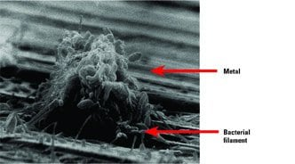 2.Hungry critters. Bacterial attack of tubes' base metal is a problem that can be just as serious as nonbacterial pitting or deposition. Courtesy: Conco Systems Inc.