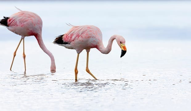 flamingo-energy-storage-lithium-mining